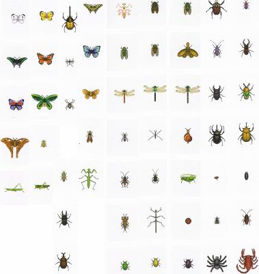 Les Insectes - Animal Crossing Wild World sur Nintendo DS